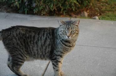 Reinwaycat